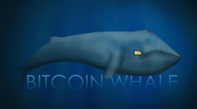 Bao nhiêu Bitcoin đang nằm trong ví các 'Cá Mập' ?